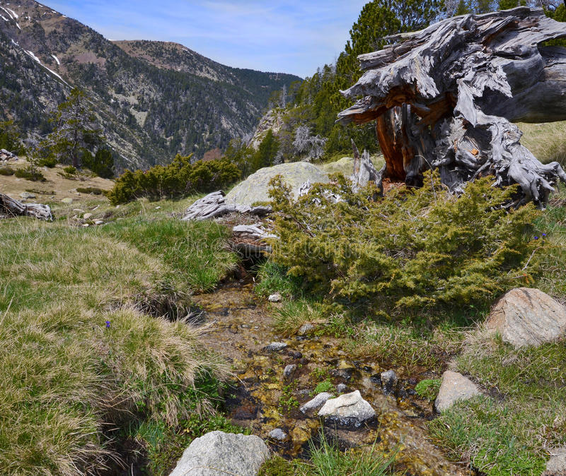 Madriu佩拉菲塔Claror谷的春天倾斜 免版税库存图片