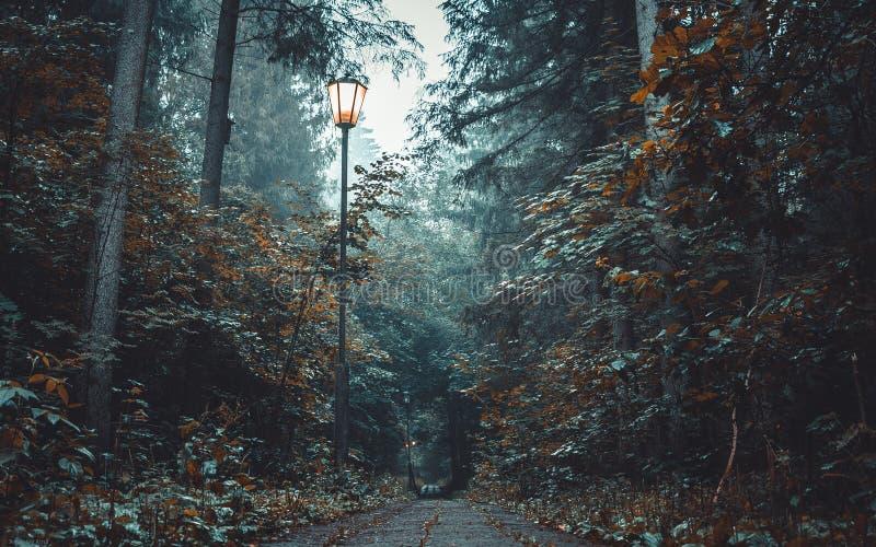 Madrugada en el bosque imagen de archivo