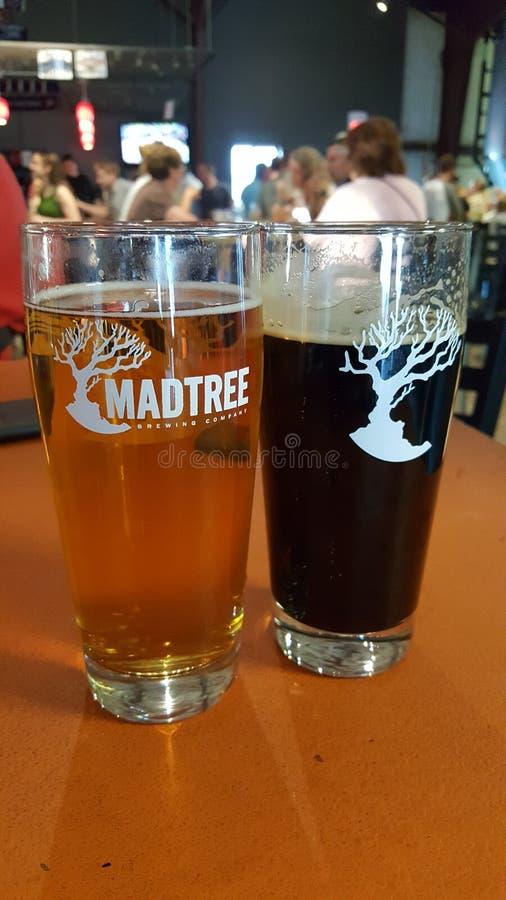 Madtree royalty free stock image