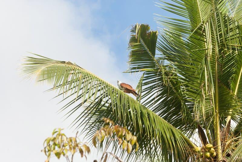 Madu甘加, Balapitiya,在棕榈树地方教育局的斯里兰卡-海鹰 免版税库存照片