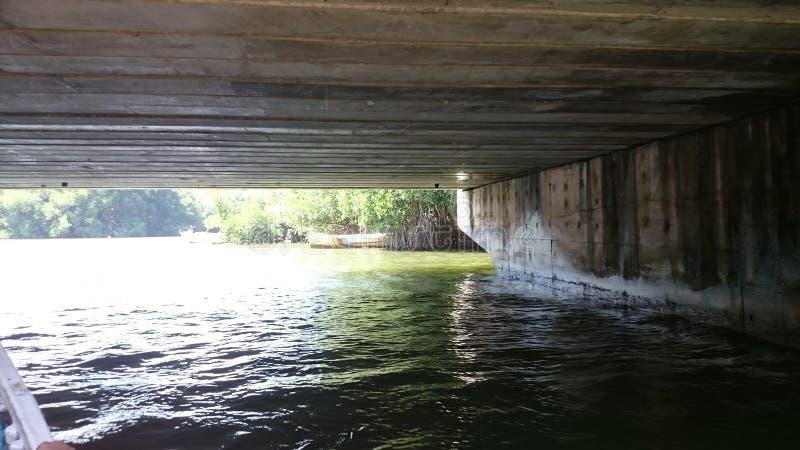 Madu ganga & x28; madu river& x29; - widok od łodzi fotografia royalty free