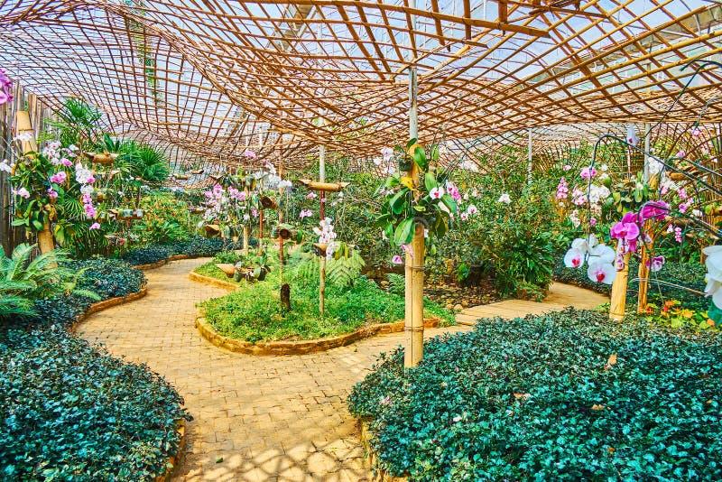 Mae华氏Luang庭院,土井桐树,泰国的兰花部门 免版税库存图片