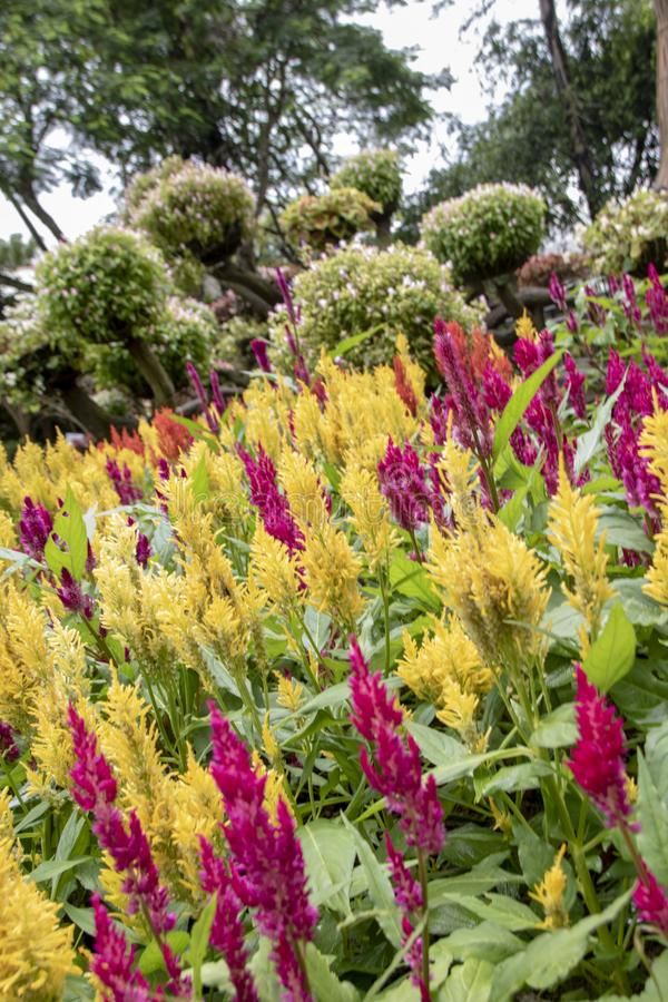 Mae Fah Garden foto de archivo libre de regalías