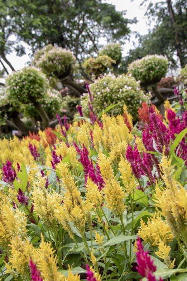 Mae Fah Garden fotografía de archivo libre de regalías