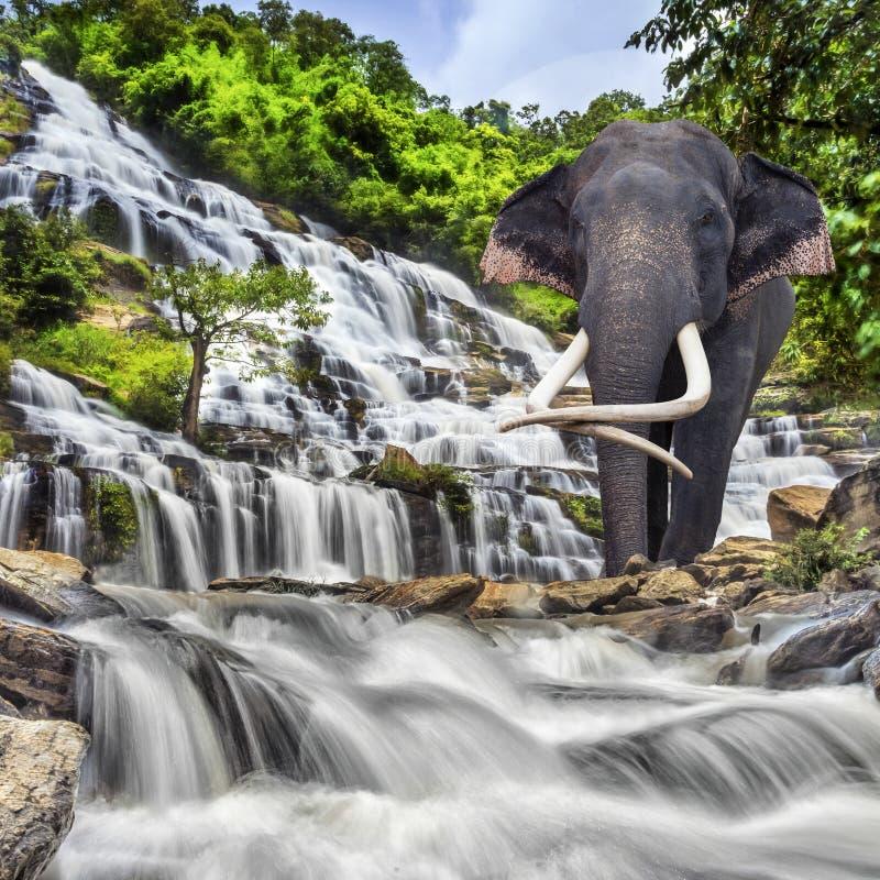 Mae Ya waterfall. In Doi Inthanon national park, Chiang Mai, Thailand royalty free stock photo