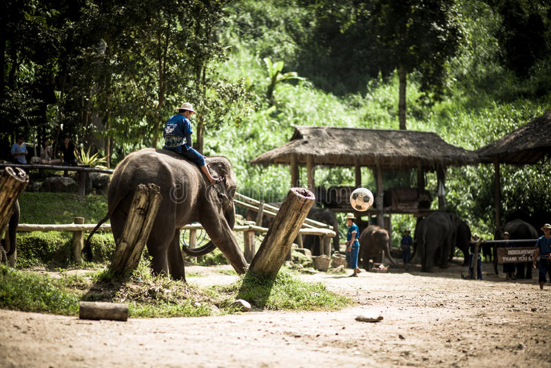 Maesa słonia obóz fotografia stock