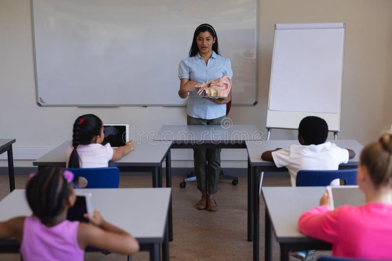 Maestra que explica la anatomía de partes del cuerpo en sala de clase foto de archivo libre de regalías