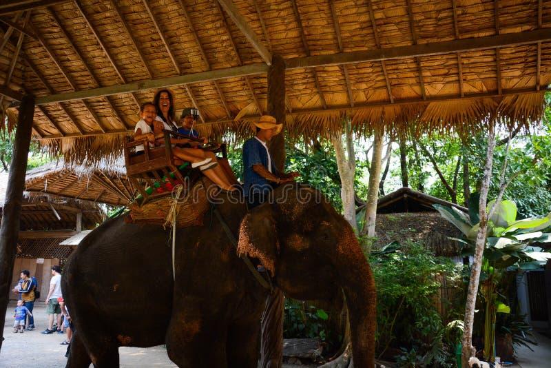 Maetaman s?onia ob?z w Chiang Mai, Tajlandia fotografia royalty free