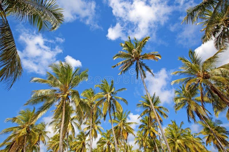 Mafia Island. Untouched nature at Mafia Island in Tanzania royalty free stock images