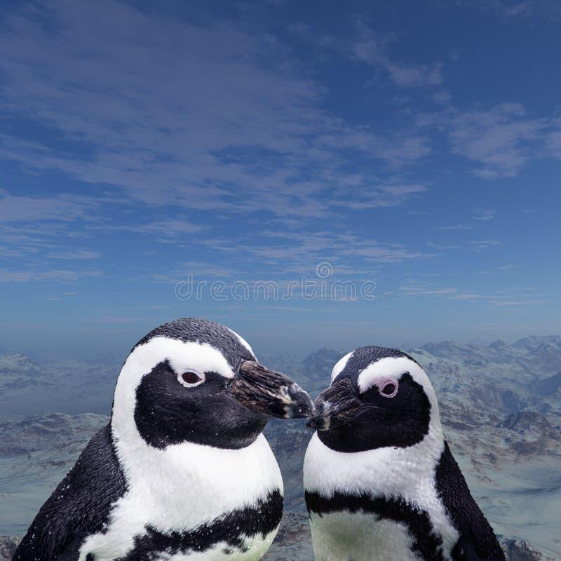 Magellan pingvin beställer sphenisciformesen, familj som spheniscidaen är en grupp av vatten- flightless fåglar som nästan exklus arkivbild
