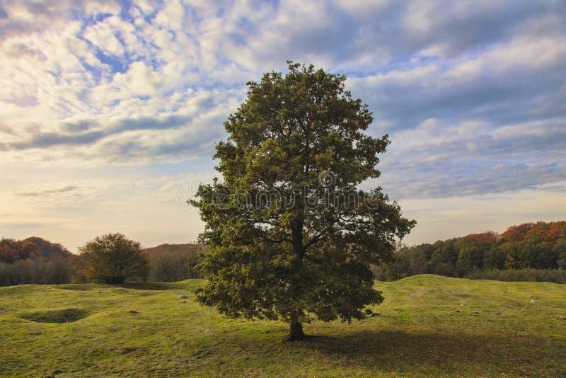 Download Magelund Tidiga Medeltida Mounds, Fotografering för Bildbyråer - Bild av park, kullar: 27286523