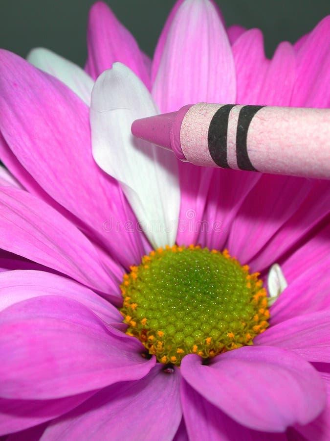 Download Magenta stock photo. Image of petals, vivid, crayon, daisy - 198682