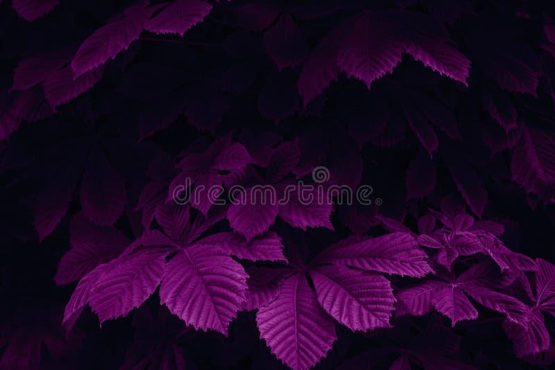 Magenta gekleurde abstracte aardscène Haagbeukbladeren in een donker bos Creatief ontwerpconcept stock foto