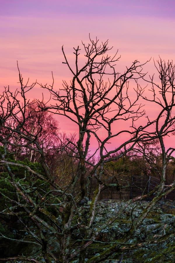Magenta viola arancio rosso del cielo di paesaggio di tramonto fotografie stock