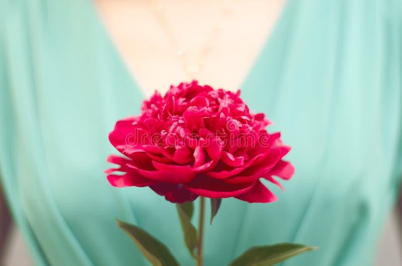 Magentarote Blume in der Hand lizenzfreie stockbilder