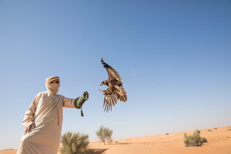Maggior aquila macchiata durante la manifestazione di caccia col falcone del deserto nel Dubai, UAE immagine stock libera da diritti