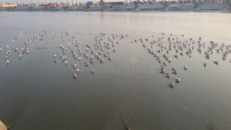 Magh Mela w Allahabad fotografia stock