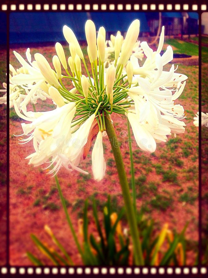 Magia en una flor imagenes de archivo