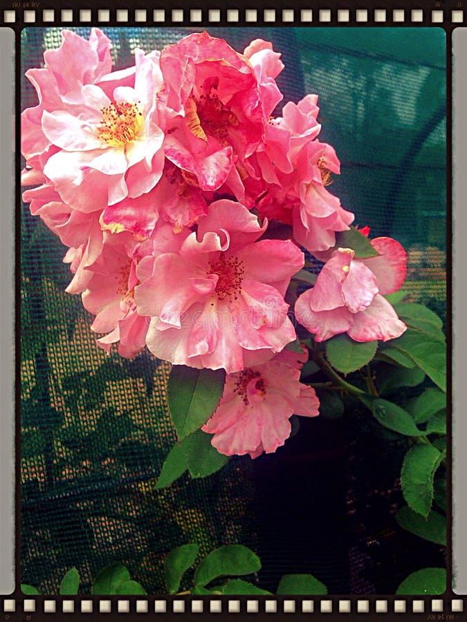 Magia en una flor foto de archivo