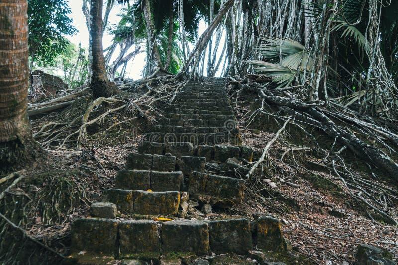 Magia kamienia kroki obraz royalty free