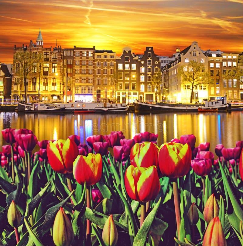 Magia krajobraz z tulipanami i budynkami w Amsterdam, Netherla fotografia stock