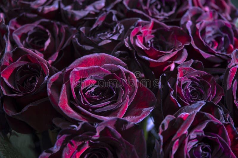 Magia negra de las rosas fotografía de archivo libre de regalías