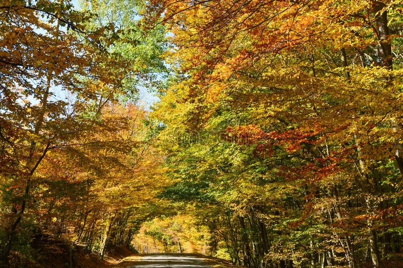 A magic autumn afternoon, yellow and golden leaves decorate a majestic road in Vermont. Relaxing and special atmosphere of a fall royalty free stock images
