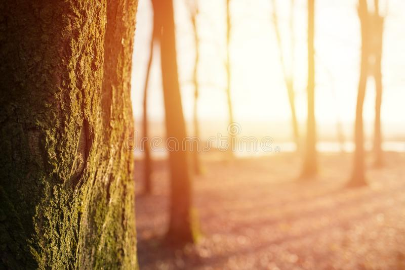 Magic autumn forest background with sunlight, copyspace stock photos