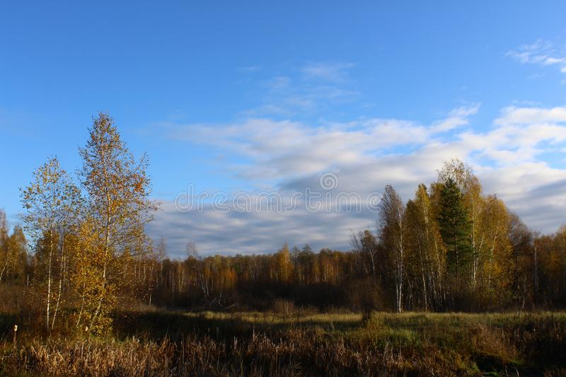 Magic autumn forest. Magical aun forest, colorful trees, bright blue sky with mighty clouds royalty free stock image