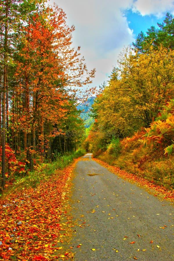 The magic of autumn royalty free stock photos