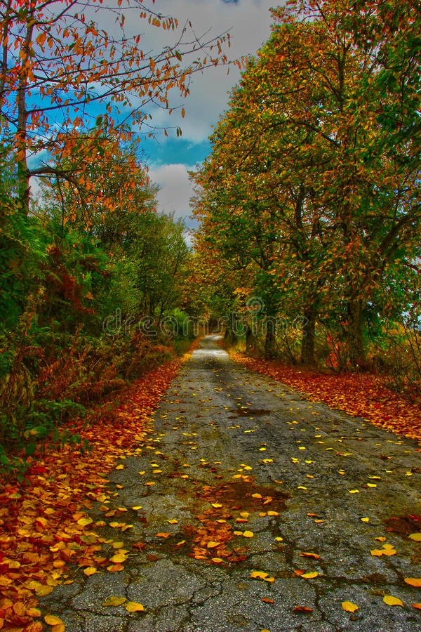 The magic of autumn stock images