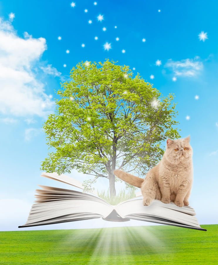Download Magic book stock photo. Image of learning, light, literature - 23268948