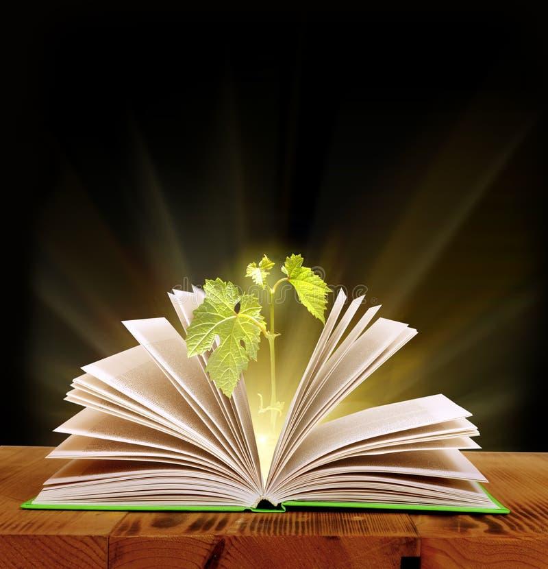 Magic book. Open magic book of nature stock photo