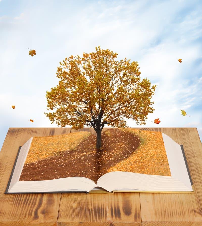 Magic book. Open magic book of nature stock images