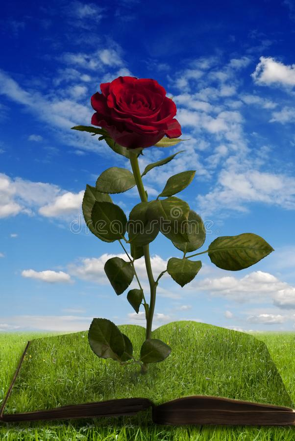 Magic book with a rose in summer landscape stock photo