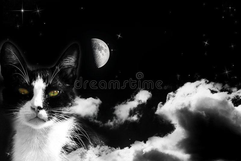 Magic cat on cloudy sky royalty free stock photo
