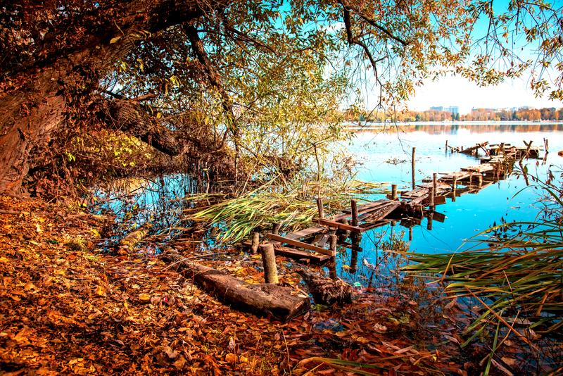 Magic charming autumn landscape with a wooden path to the lake and a mystical tree and the leaves fall at dawn meditation, royalty free stock photography