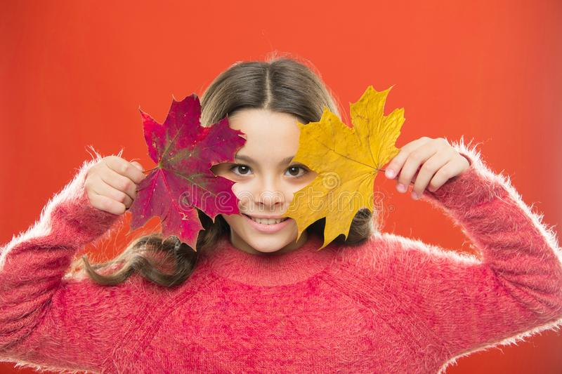 Magic colors. Amazing autumn. Little child hold maple leaves changing color. Small girl smile with autumn leaves royalty free stock images
