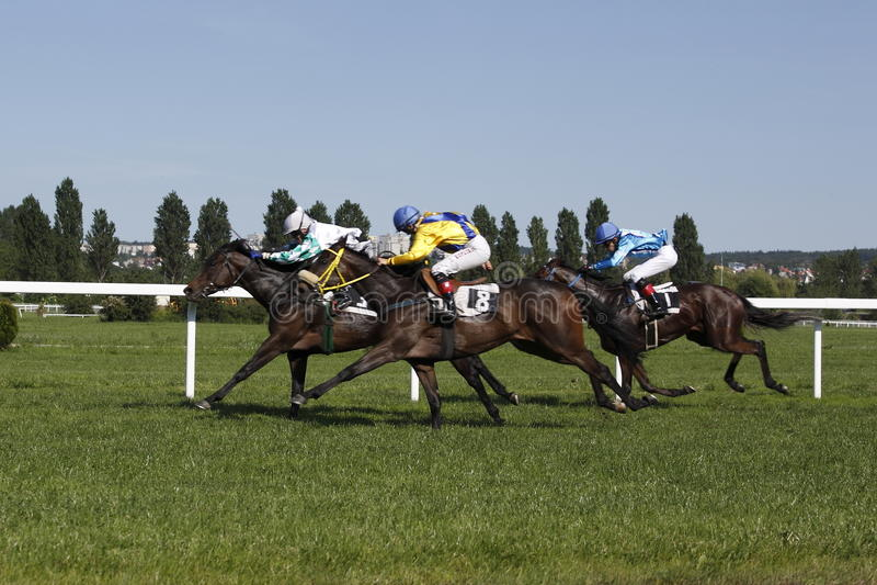 Download Magic Corfu Race At Horse Racing In Prague Editorial Image - Image of apinoa, horse: 14615650