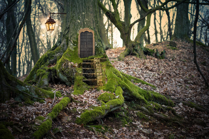 Magic fairy forest vector illustration