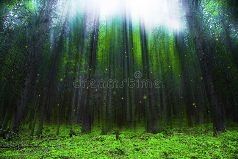 Magic fantasy forest with lights and mist. Magic fantasy forest with lights, fairytale forest scene stock photography