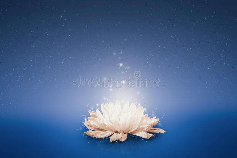 Magic flower floating on water. royalty free stock photo