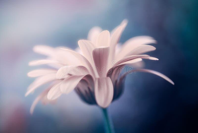 Magic flower. Magic wild flower with beautiful bokeh stock image