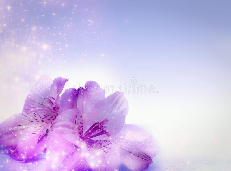 Magic Flowers Royalty Free Stock Image
