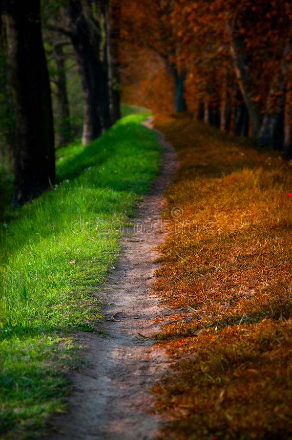 Magic forest, summer and autumn royalty free stock photo