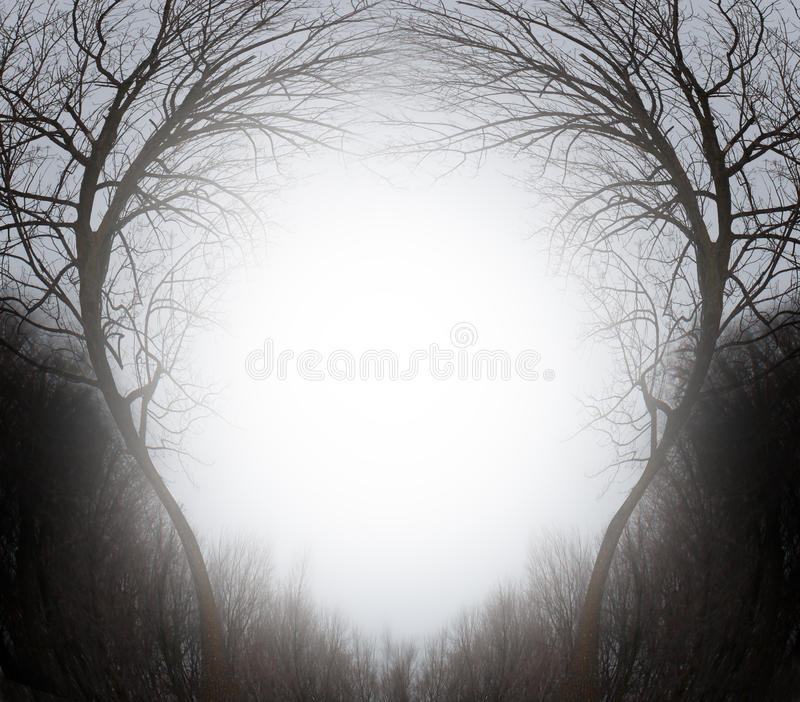 Magic Forest. Winter scene frame blank sign as a mystical magical background of trees in an enchanted environment with a glowing sun shining a bright light with royalty free illustration