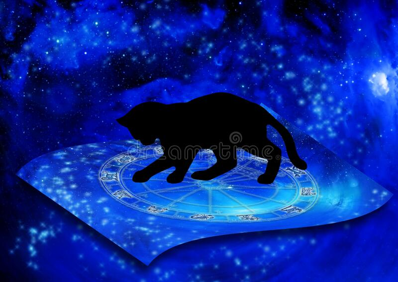 Magic horoscope with black cat and stars like astrology concept royalty free stock photography