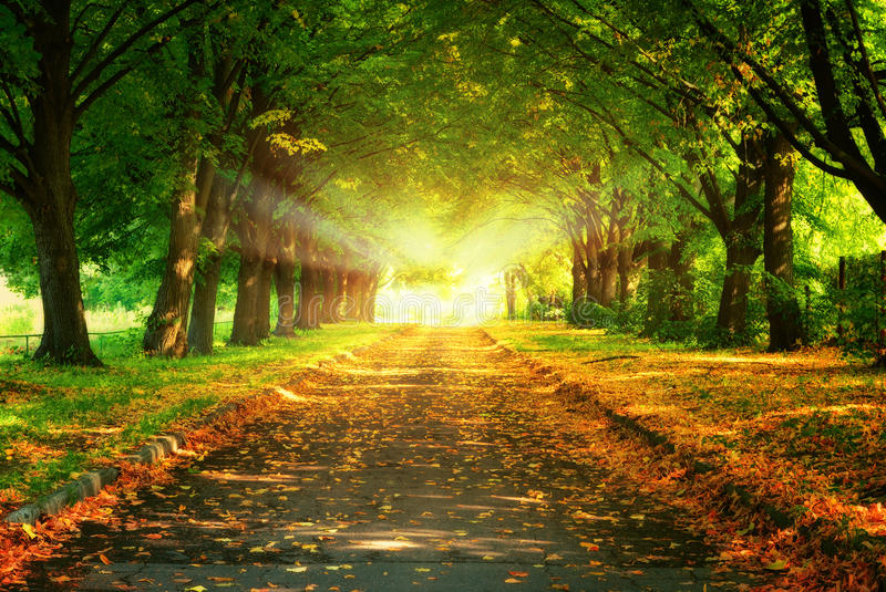 Magic light and walkway in autumn park royalty free stock images