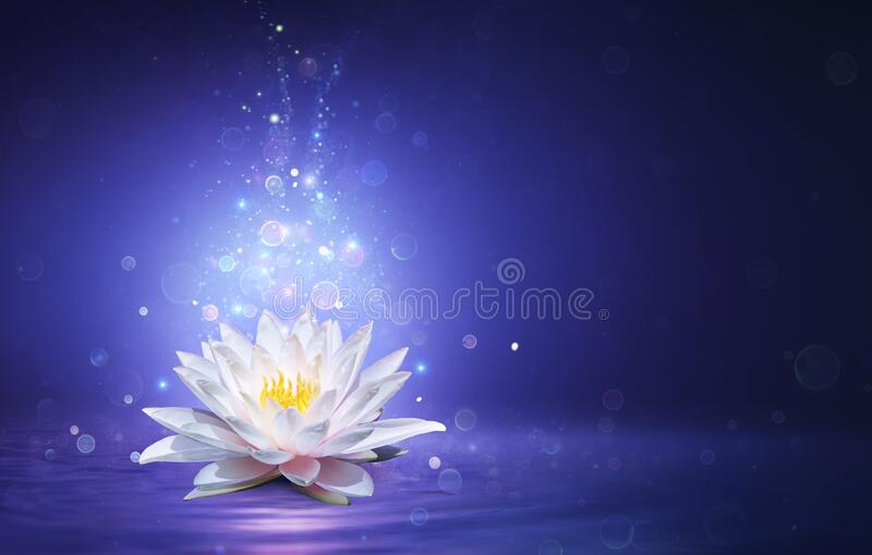 Magic Lotus Flower With Fairy Light stock images