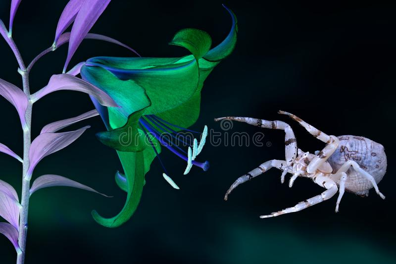 Magic luminous blooming orchid flower and the spider that guards him. Inspiration fantasy image on a black background stock photos